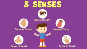 The 5 senses. Sight. Sound. Touch. Taste. Smell.