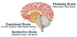 Three brains in one